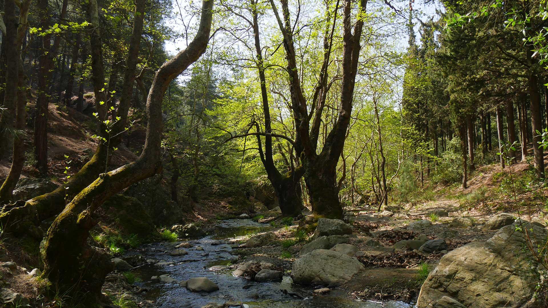 platanakia natura