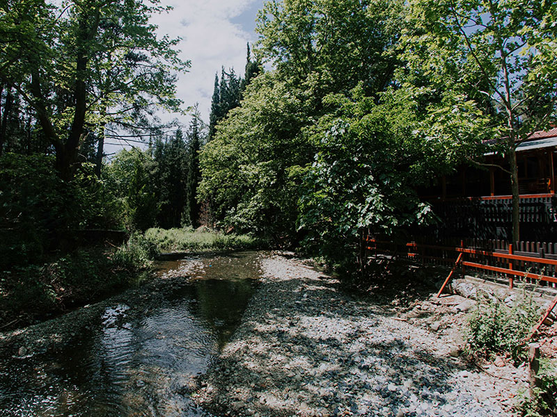 platanaikia-natura